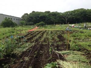 2013農園